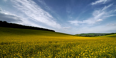 Colza Colza (Amanda Hinault - 風流韻事) Tags: paysage landscape nature pentax pentaxk1markii darktable ccbysa photobyamandahinault creativecommons pentaxart