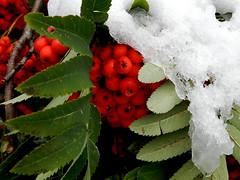 vom Schnee überrascht
