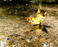 The Puddle (_Lionel_08) Tags: fall puddle mud leaf nature color colors swamp louisiana reflection brown autumn seasons