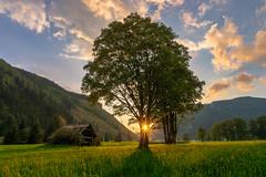 Ramsau - Austria (highflyer1964) Tags: gebirge sonyilce landscape landschaft sonne himmel ramsau ilce7m2 alpen clouds baum fe1635mmf4zaoss sonnenuntergang sonyalpha7m2 berge österreich gegenlicht austria sonyilce7m2 wolken sunrise