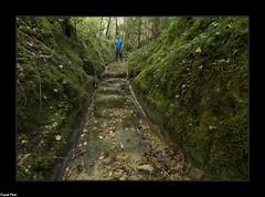 Voie Celtique - La Lanquetine - Salins Les Bains (francky25) Tags: voie celtique la lanquetine salins les bains franchecomté histoire ancienne route