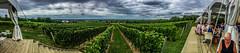 2018 - photo 246 of 365 - panoramic shot at Luckett's Vineyard looking over Blomidon (old_hippy1948) Tags: panoramic