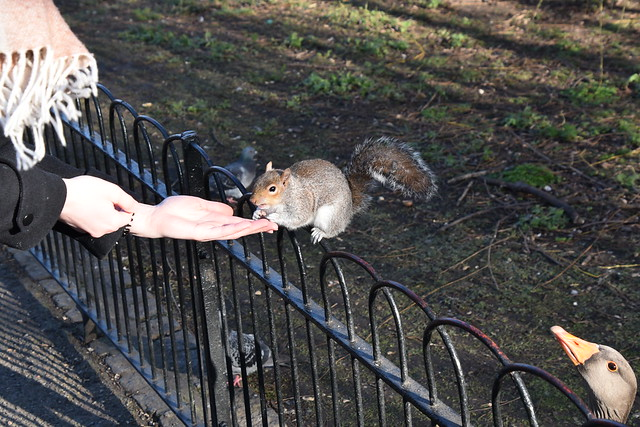 Hungry rodents and observant birds