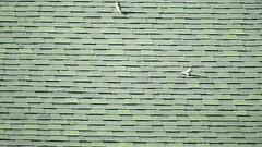 Tree Swallow_5912.mp4 (Henryr10) Tags: eastforklake eastforkstatepark bethelohio littlemiamiriverbasin usa southbeach tachycinetabicolor tachycineta bicolor treeswallow swallow avian bird vogel ibon oiseau pasare fågel uccello tékklistar tres