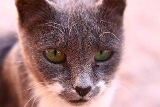 Friendly Feral Cat
