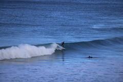 IMG_3684 (gervo1865_2 - LJ Gervasoni) Tags: surfing with whales lady bay warrnambool victoria 2017 ocean sea water waves coast coastal marine wildlife sealife blue photographerljgervasoni