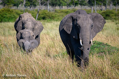 Me encanta cuando todo encaja en su sitio (vfr800roja) Tags: africa kenya maratriangle masaimara transmara valledelrift kenia ke