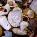 Old Shells