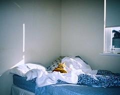 Blue, blue, electric blue (isadora.jpg) Tags: 35mm kodak ultramax 400 film yashica t4 point shoot winter bedroom cat macska sun shadow ginger