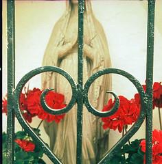 Beautyflex2.8-659-Crossbird200-FujiXpress-C41-6 (photo:::makina) Tags: color heart roses rollei crossbird 200 fuji hunt xpress c41 beautyflex canter 28