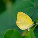 Yellow Yellow Tiny Fellow!