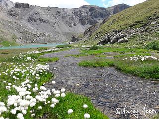 Ruisseau et lac - Altitude 2630 m