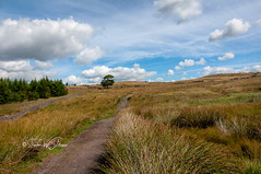 DSC_0054 - Lancashire moorland (SWJuk) Tags: swjuk uk unitedkingdom gb britain england lancashire burnley home crownpoint clowbridgereservoir dunnockshaw dunnockshawcommunitywoodland trees grasses path footpath trail bluesky clouds landscape 2018 jul2018 summer nikon d7100 nikond7100 tokina1116 wideangle rawnef lightroomclassiccc
