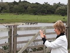 13/09/18 - Visita a Santa Vitória do Palmar: reserva ecológica do Taim.