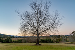 Out in the Country (Merrillie) Tags: landscape sunset gumtree australia rural hill newsouthwales dusk trees country scenery tree cows acreage gresford farm twilight countryside property