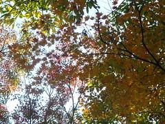 a (38) (hiromi89) Tags: japan beauty beautiful scenery flower wood pond