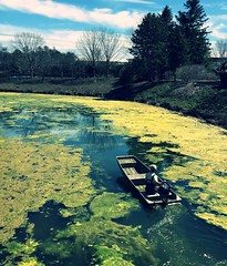 Maneuvering (Demmer S) Tags: nature outdoors maneuvering water greenery trees clouds sky outside boat reflection reflecting pond river lake stillwaters algaebloom pondscum floating coating algae alga science botanical biology botany surface person people tree landscape