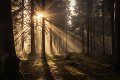 forest series #96 (Stefan A. Schmidt) Tags: warstein nordrheinwestfalen deutschland de forest tree trees sunbeam fog pentaxart greatphotographers