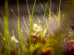 Nature (banagher_links) Tags: olympus omd em10 mark iii sigma nature moscow mft micro 43 russia