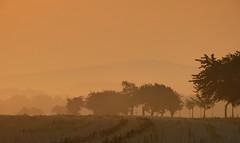 Rosa (isajachevalier) Tags: landschaft licht sachsen morgen morgenrot nebel natur panasonicdmcfz150