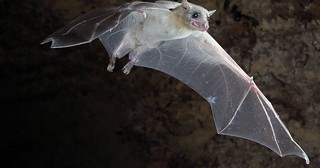 """Researchers Have Figured Out How To """"Translate"""" Bat Talk. Turns Out, They Argue- A Lot"""