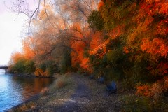 Perry Island (stephaneblaisphoto) Tags: autumn collection beauty nature change day direction fall growth no people orange color outdoors park plant river scenics tranquil scene tranquility tree water montreal quebec canada