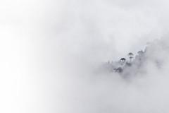 Araucarias in the Fog (Voy Foteando - Manuel Fuentes Fotografía) Tags: araucarias trees forest chile araucania landscape paisajes invierno winter fog niebla neblina mood composition malalcahuello parque nacional