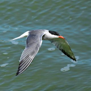 Tern Preston Docks F00361 D210bob DSC_3631