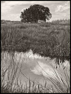 Lake Woodruff #1 2014; Live Oak