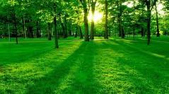 Nature's View (deborahelizabethstonesaret) Tags: deborahelizabethstonesaret nature michigan unitedstates