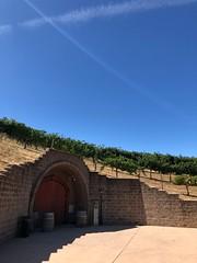 Byington Winery (tiny red warrior) Tags: byingtonwinery byingtonvineyard vineyard winery california santacruzmountains losgatos winetasting