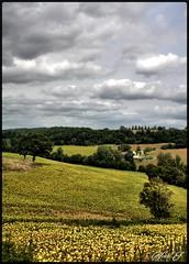Tournesol (wiart.J) Tags: paysage campagne tournesols jaune champ