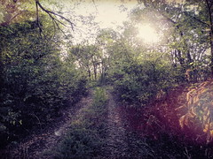 Going Deeper (clarkcg photography) Tags: path trial woods forest nature sun green bushes growth landscape rural saturdaylandscape 7dwf