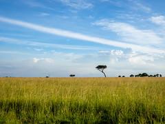 late afternoon light over the plains (odileva) Tags: paysage june kenia masaimaranp nature transmara riftvalleyprovince kenya ke