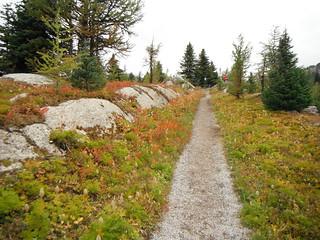September Hiking Alpines