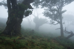 Gloomy (Aymeric Gouin) Tags: portugal madeira madère moody fog brouillard mist brume foret forest woods landscape paysage paisaje landschaft nature silhouette travel voyage europe olympus omd em10 aymgo aymericgouin