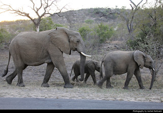 Elephant Family, Kruger NP, South Africa