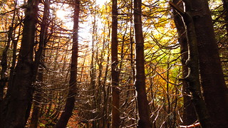 IMG_7216 Il bosco (Lagdei)