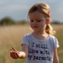 Mante religieuse (Mantis religiosa) A7RIII (Denis.R) Tags: mantereligieuse mantisreligiosa nature enfant insecte pelouse sortie sony alpha7riii a7riii sonnar sel55f18z france lorraine moselle denisr denisrebadj ww