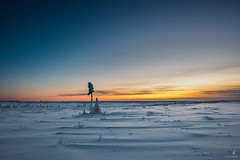The fading tree line above the arctic circle (Chriskellyphotography) Tags: sunset loneliness lonetree ith inuvik tuttoyaktuk northwestterritories abovethearcticcircle cold snow flat