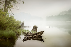 Griffin (briantolin) Tags: lake mist morning log wood mistymorning calm nikond750 brown nature