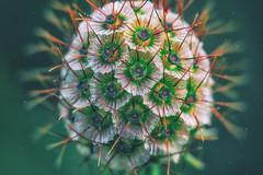 OddBall (BigWhitePelican) Tags: finland macro nature summer flora canoneos70d adobelightroom6 niktools 2018 september