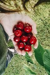 the perks of having a garden 🍒 (lina zelonka) Tags: cherries kirschen garten linazelonka garden summer sommer green grün huawei huaweip8 fruit obst früchte healthy vertical
