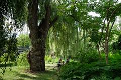 Lunch under the tree (Papaye_verte) Tags: déjeuner arbre streetphotography park picnic saulepleureur lunch parc montréal québec canada