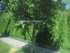 IMG_8356 (Andy E. Nystrom) Tags: bellevue washington wa bellevuewashington