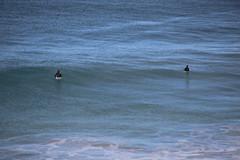IMG_3536 (gervo1865_2 - LJ Gervasoni) Tags: surfing with whales lady bay warrnambool victoria 2017 ocean sea water waves coast coastal marine wildlife sealife blue photographerljgervasoni
