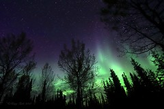 Green and Purple Magic (Katy on the Tundra) Tags: northernlights auroraborealis nightsky