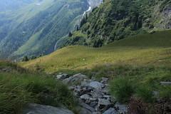 prairies (bulbocode909) Tags: valais suisse mex laudemex alpages prairies forêts arbres montagnes nature rochers vert