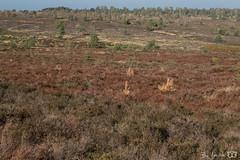 DN9A4778 (Josette Veltman) Tags: sallandseheuvelrug salland heuvelrug nijverdal holten holterberg natuurmonumenten nederland herfst overijssel canon landschap