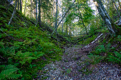 03092018-DSCF1024-2 (Ringela) Tags: leksands rastplats september 2018 sweden river nature tree fujifilm xt1